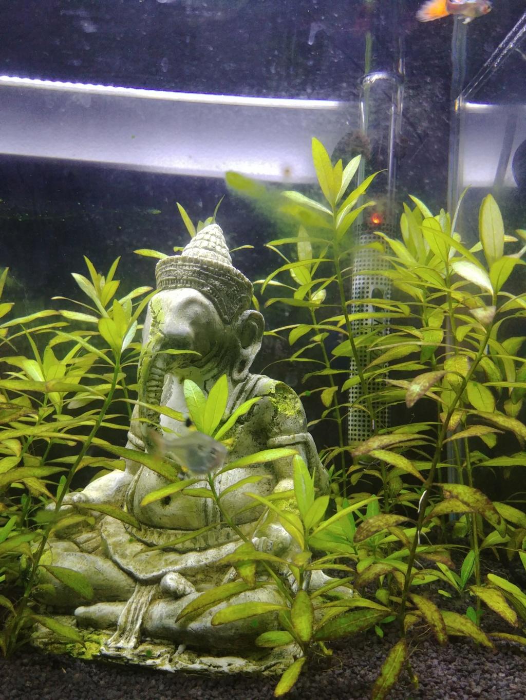plantes qui deviennent jaunes et algues sur vitre Faible10
