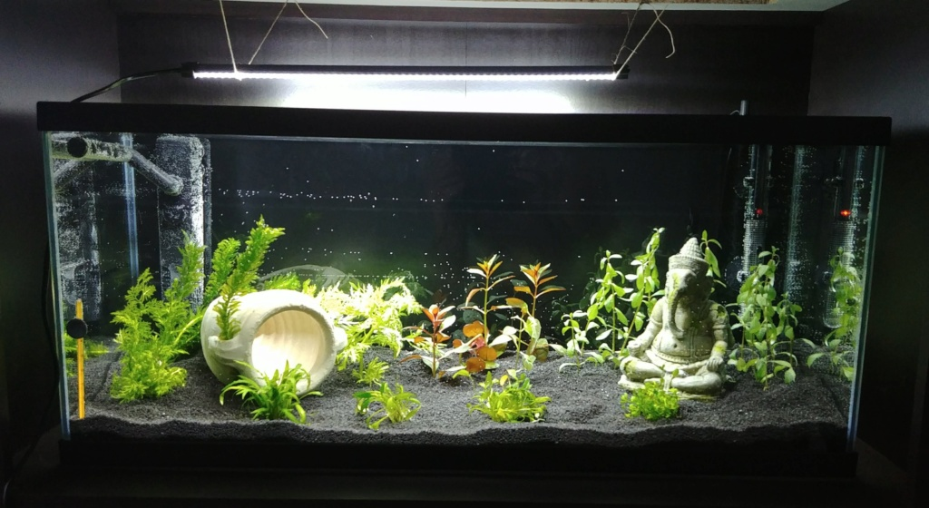 plantes qui deviennent jaunes et algues sur vitre Mise_e10