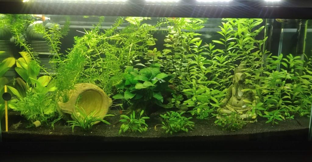 plantes qui deviennent jaunes et algues sur vitre Pleine10