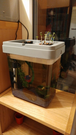 présentation aquarium chirashi 20181111