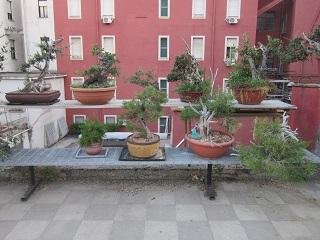 bigliettini d'amore ad uso dei bonsaisti per le proprie compagne per feste ed occasioni varie Terraz10
