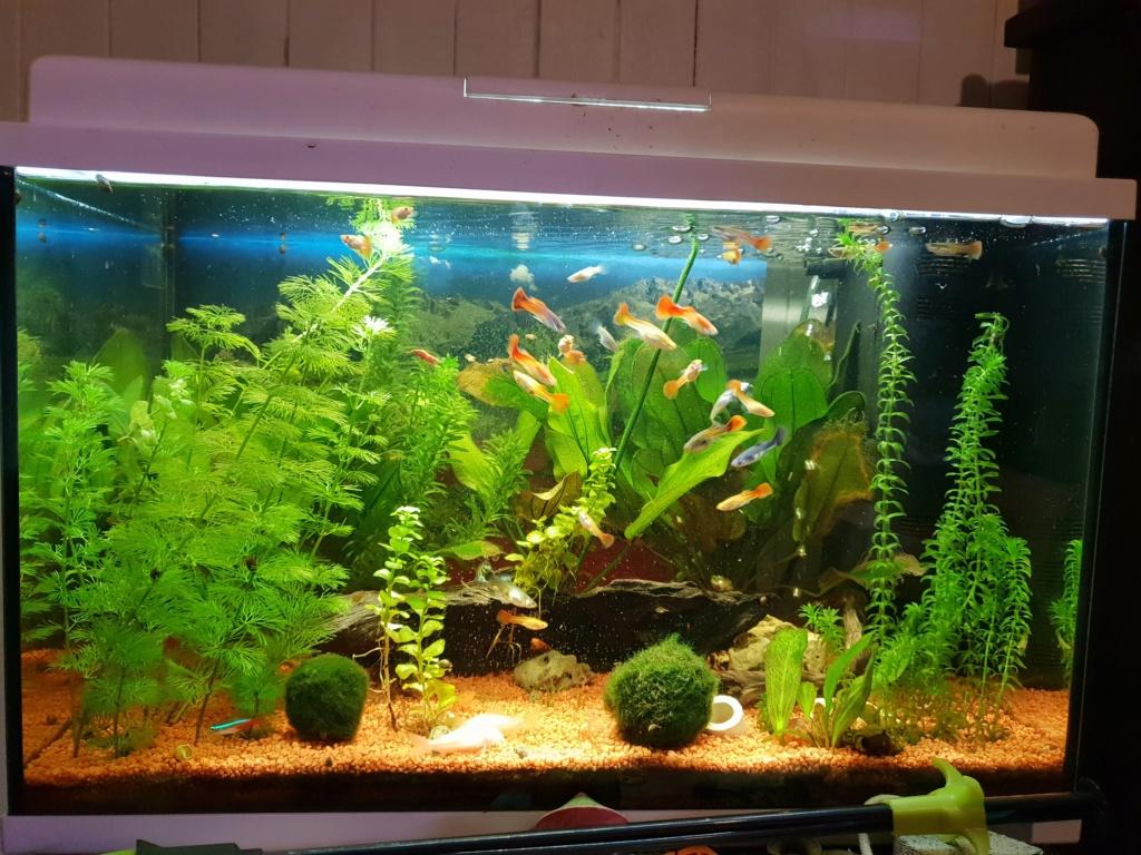 Eau de mon aquarium déréglée !  15491011
