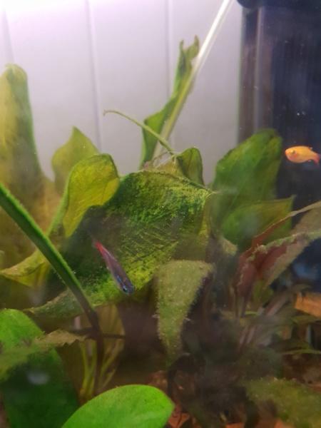Plantes et algues  15495410