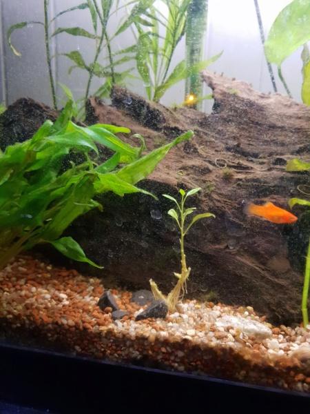 Plantes et algues  15495512
