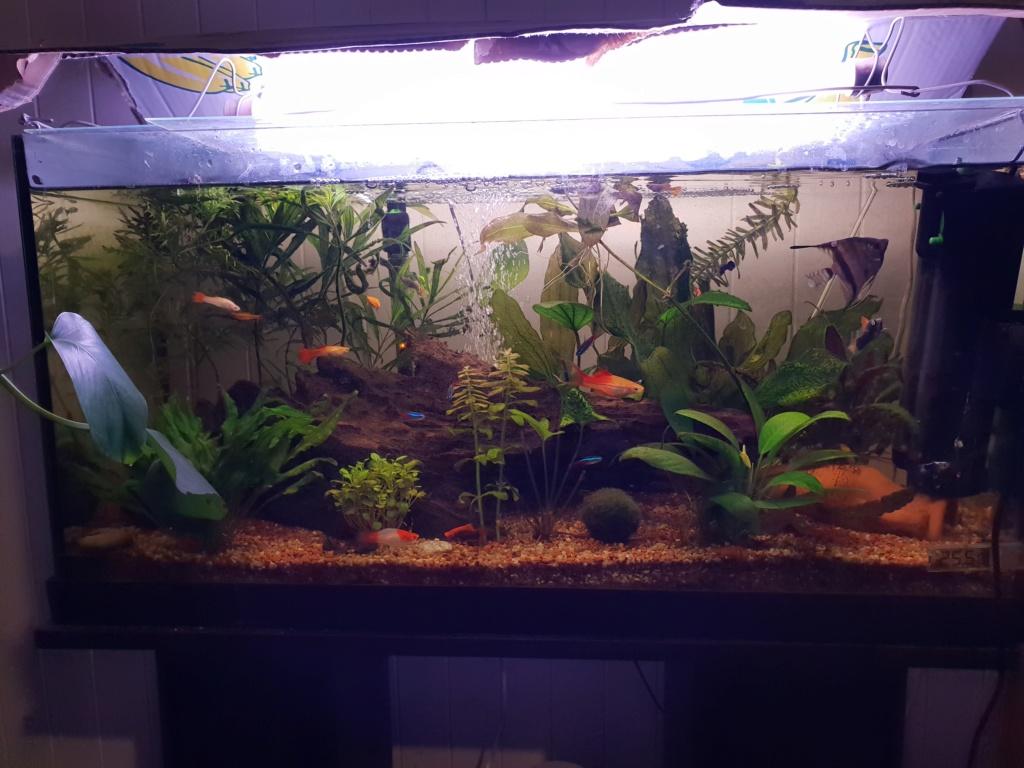 Eau de mon aquarium déréglée !  20190110