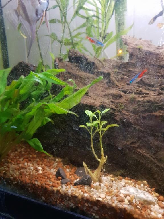 Plantes et algues  20190214