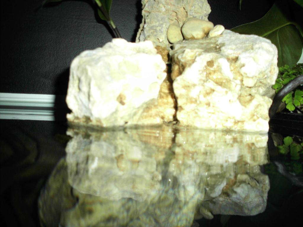 Amazonien 250L Imag0433