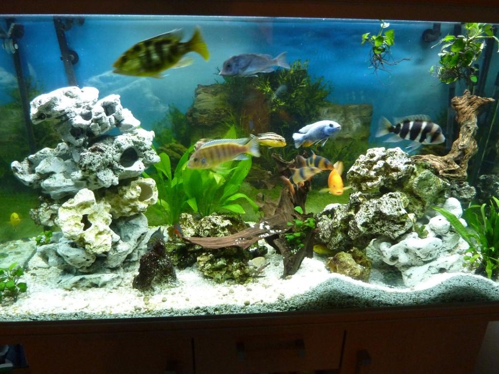 mon aquarium 00111