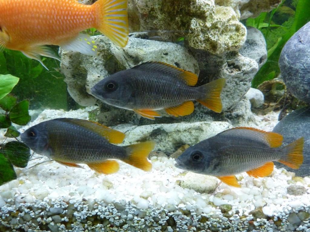 mon aquarium 01011