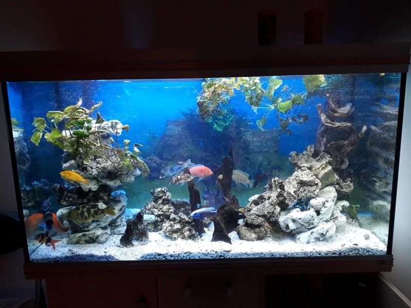 mon aquarium 20190210