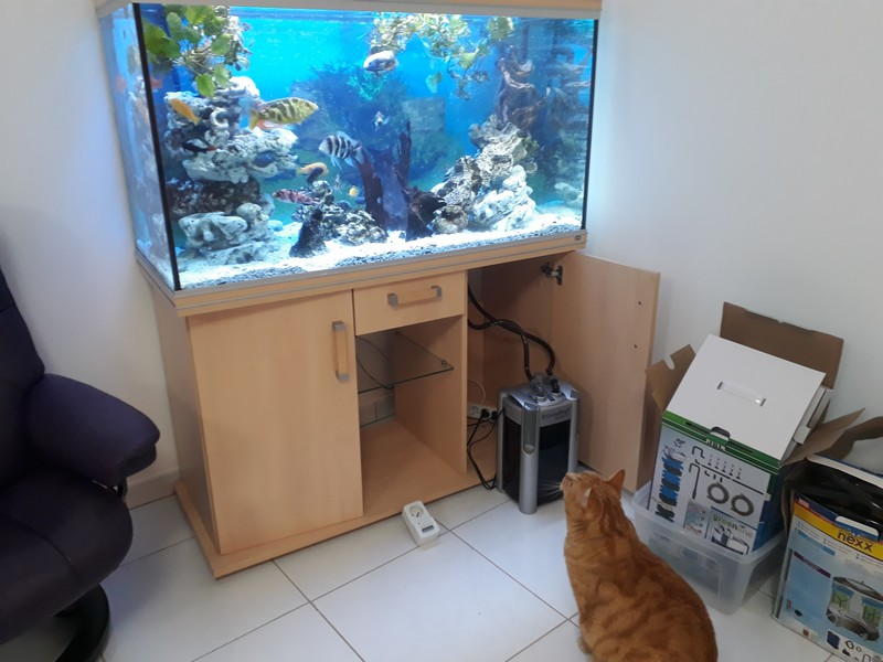 mon aquarium 20190211