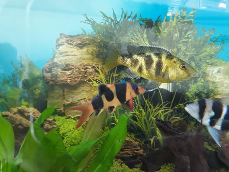 mon aquarium 20190310