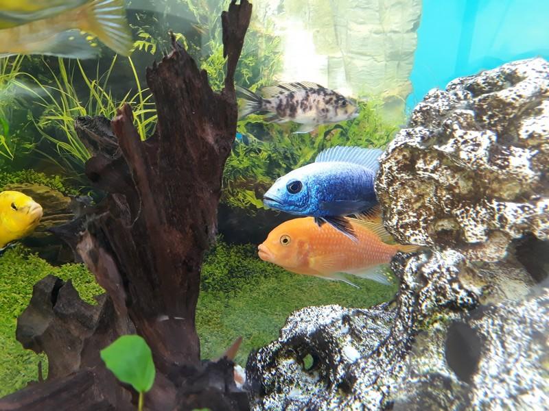 mon aquarium 20190311