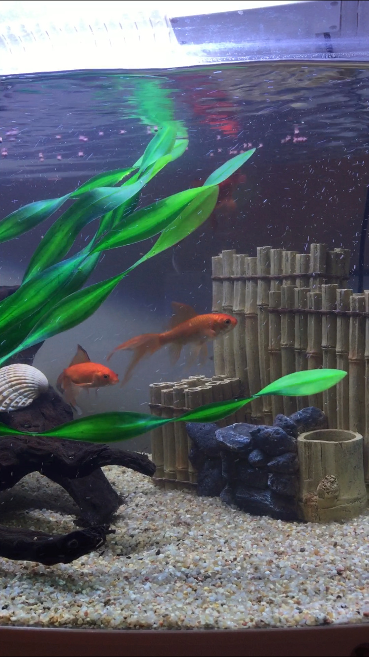 PR et aquarium non cyclé, impossible de les garder ?  Img_4910