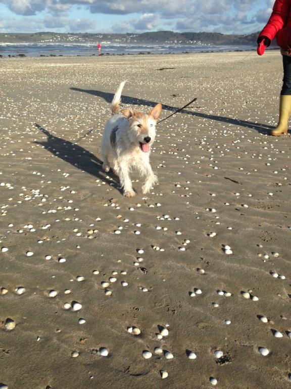 Dobby - mâle x Fox terrier (01/01/2010)  Img_2210