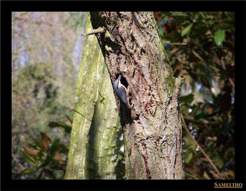 Les oiseaux sauvage que l'on rencontre dans le zoo Citell10