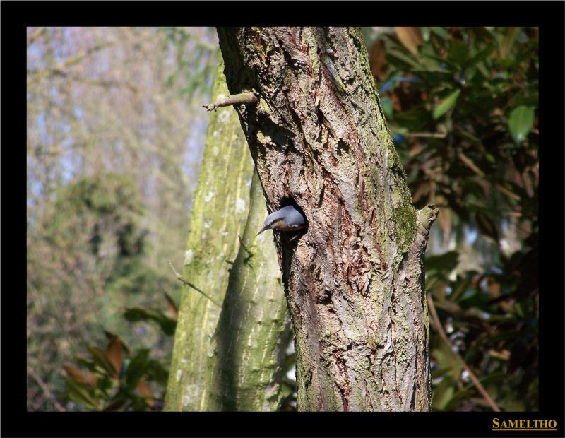 Les oiseaux sauvage que l'on rencontre dans le zoo Citell11