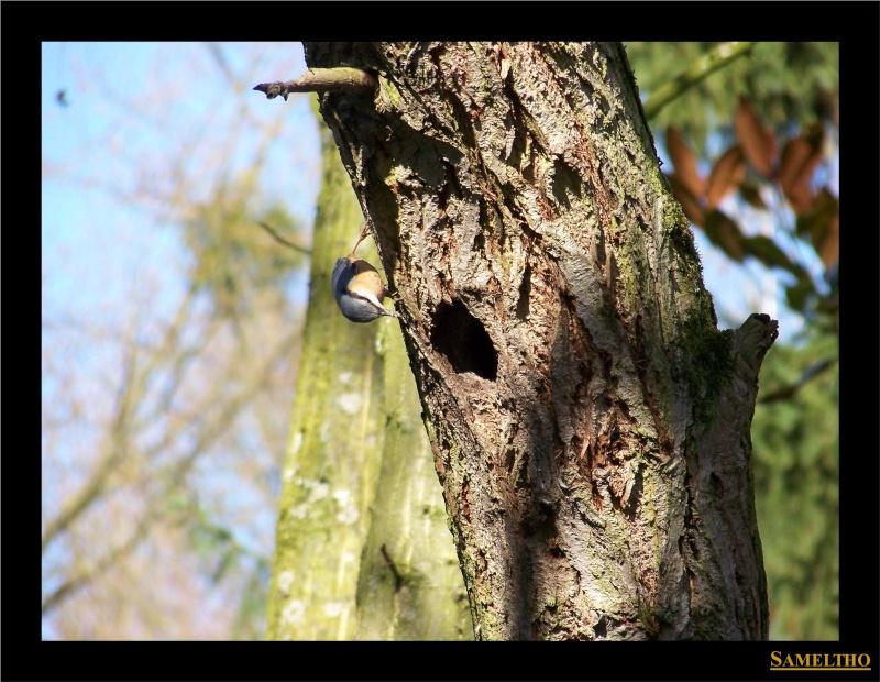 Les oiseaux sauvage que l'on rencontre dans le zoo Citell12