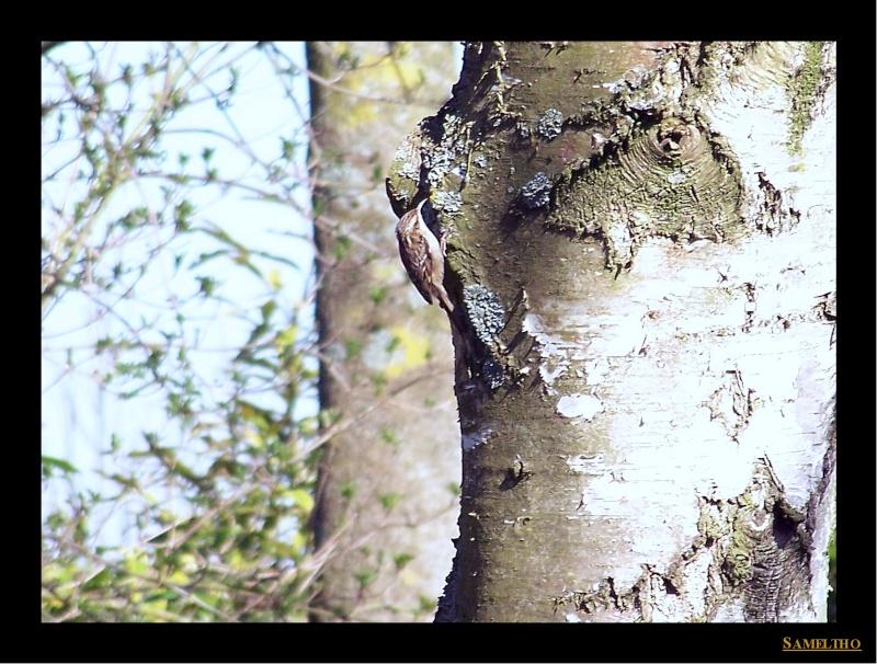 Les oiseaux sauvage que l'on rencontre dans le zoo Citell13
