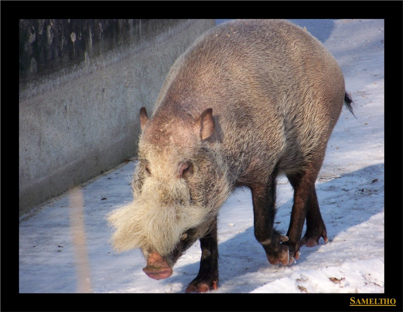 Le zoo de Munich Munich15