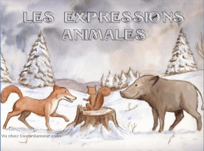 LES EXPRESSIONS ANIMALES !! Expres10
