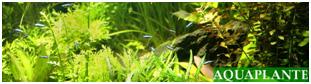 Nouveau partenaire pour les plantes et autres Aquapl10