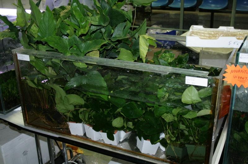 Nouveau partenaire pour les plantes et autres Img_2516