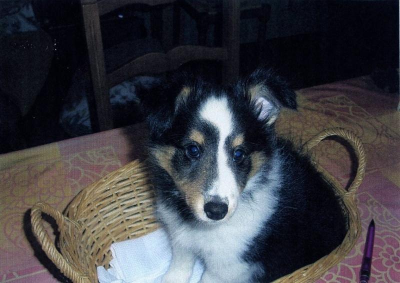 Un petit mâle tricolor disponible chez une amie (VENDU) Elvis10