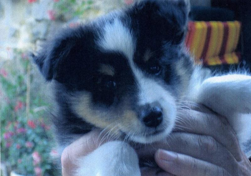 Un petit mâle tricolor disponible chez une amie (VENDU) Elvis110