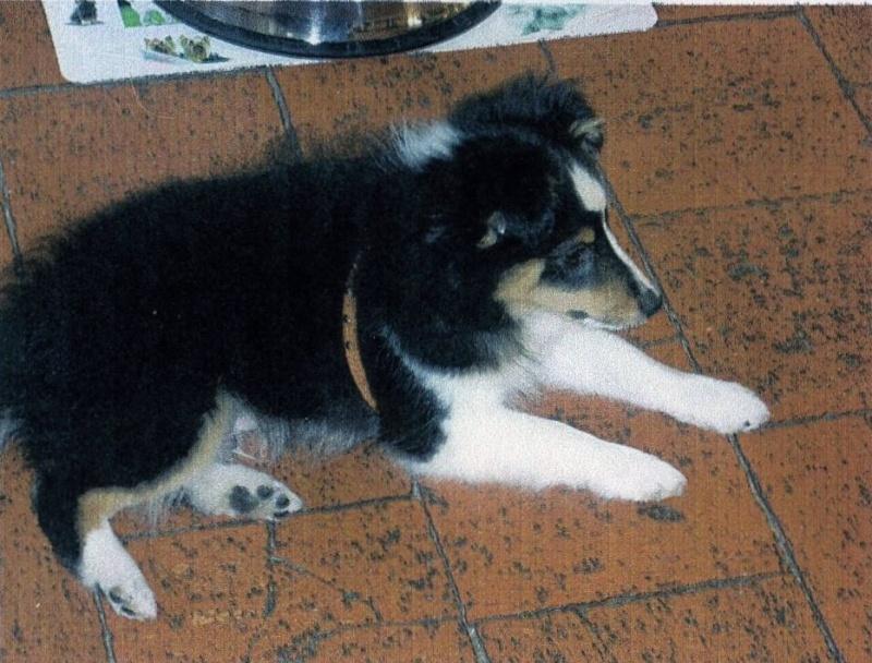 Un petit mâle tricolor disponible chez une amie (VENDU) Elvis210