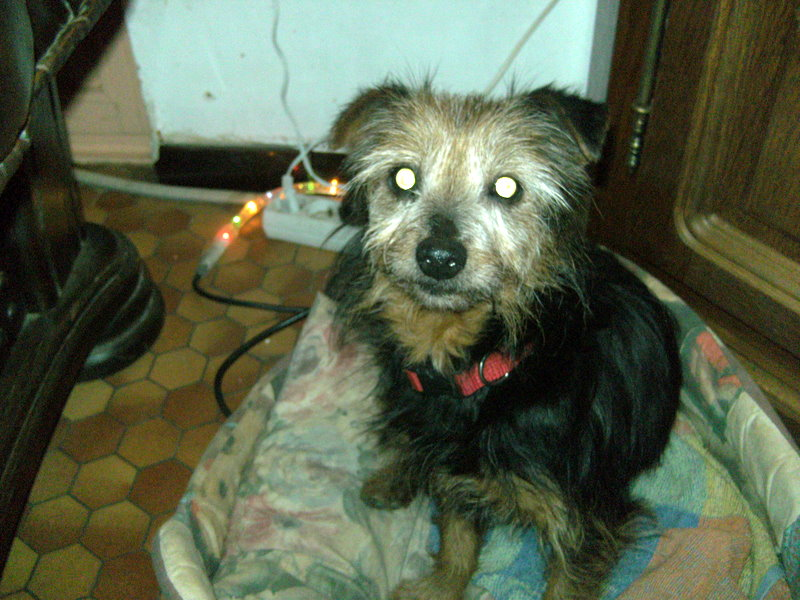 Petit chien noir, ST DIDIER LA FORET 03110 Bild1212