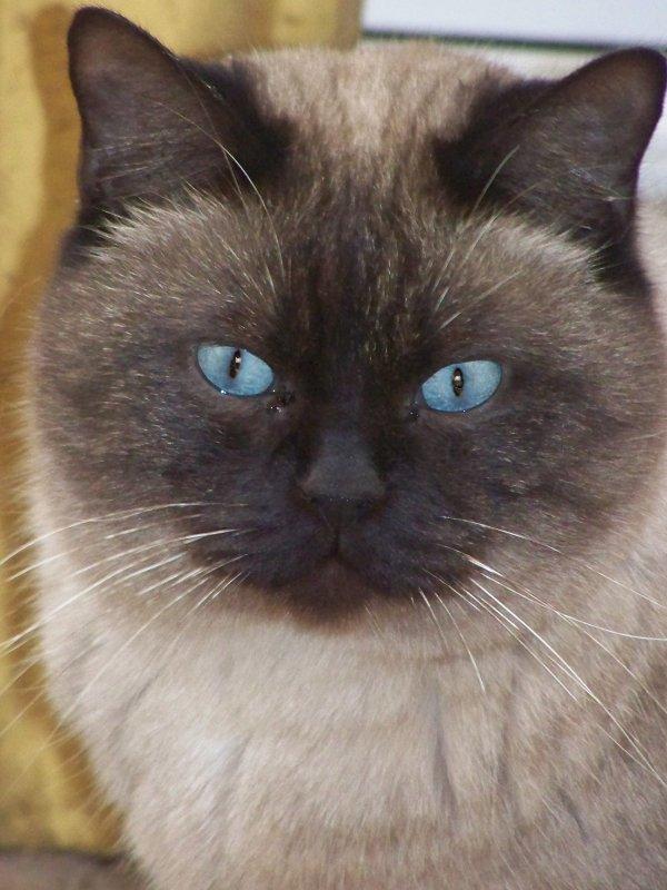 Yeux de chats Scratc10