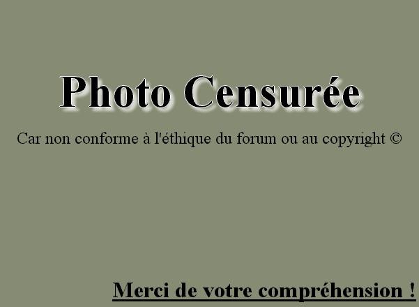 photos de cerf Photo-11