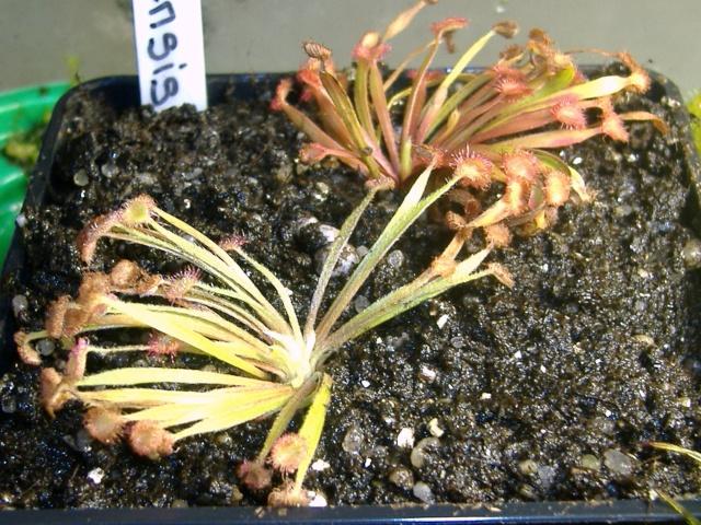 Photo des plantes de CZplants Ordens10