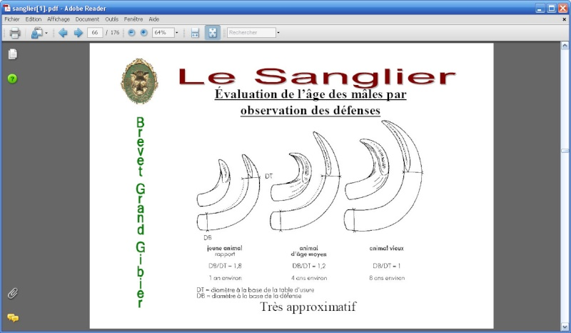 Petite Question Sanglier Ce114