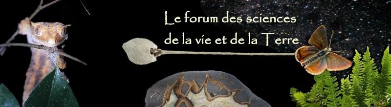 VOTE FINAL POUR LE CHOIX DE LA BANNIERE DU FORUM Copie_12