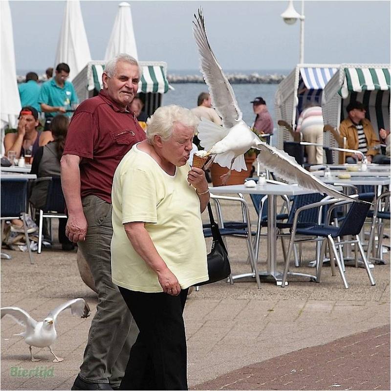 En BZH même les oiseaux sont des sauvages Image112