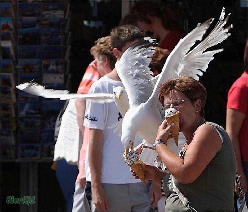 En BZH même les oiseaux sont des sauvages Image113