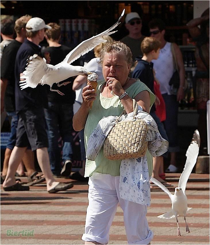 En BZH même les oiseaux sont des sauvages Image115