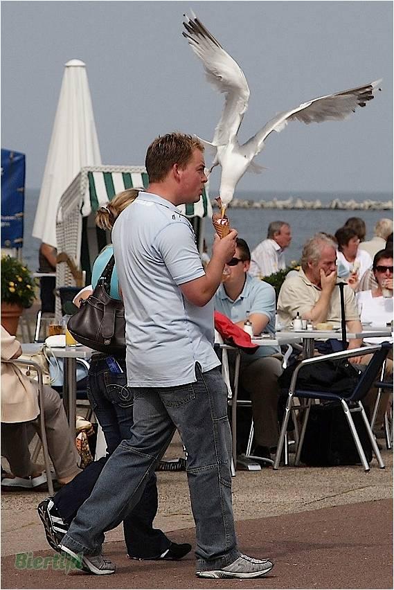 En BZH même les oiseaux sont des sauvages Image211