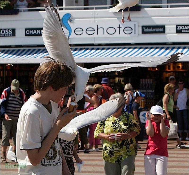 En BZH même les oiseaux sont des sauvages Image311