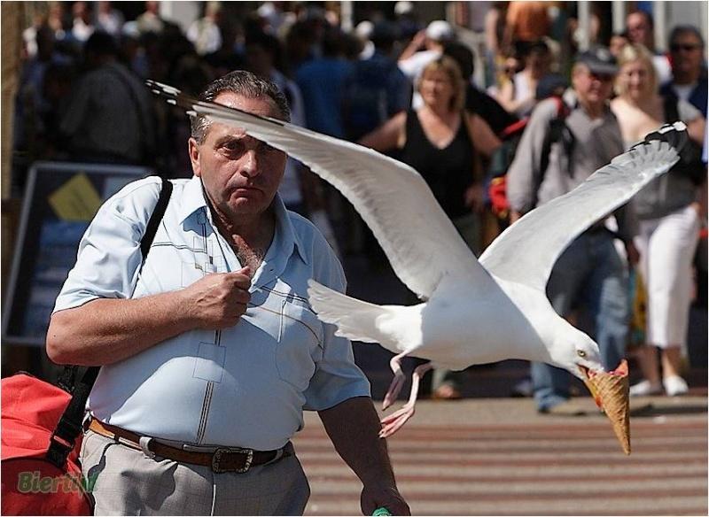 En BZH même les oiseaux sont des sauvages Image411