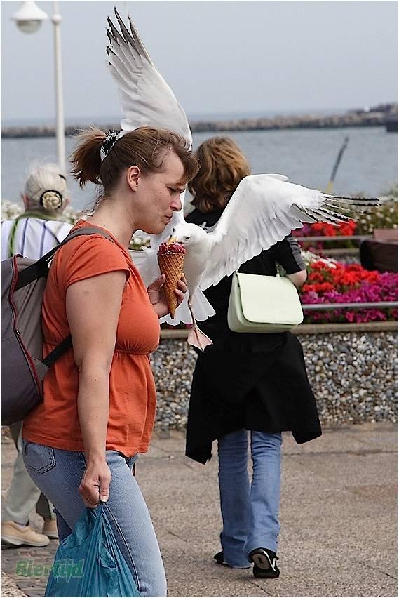 En BZH même les oiseaux sont des sauvages Image511