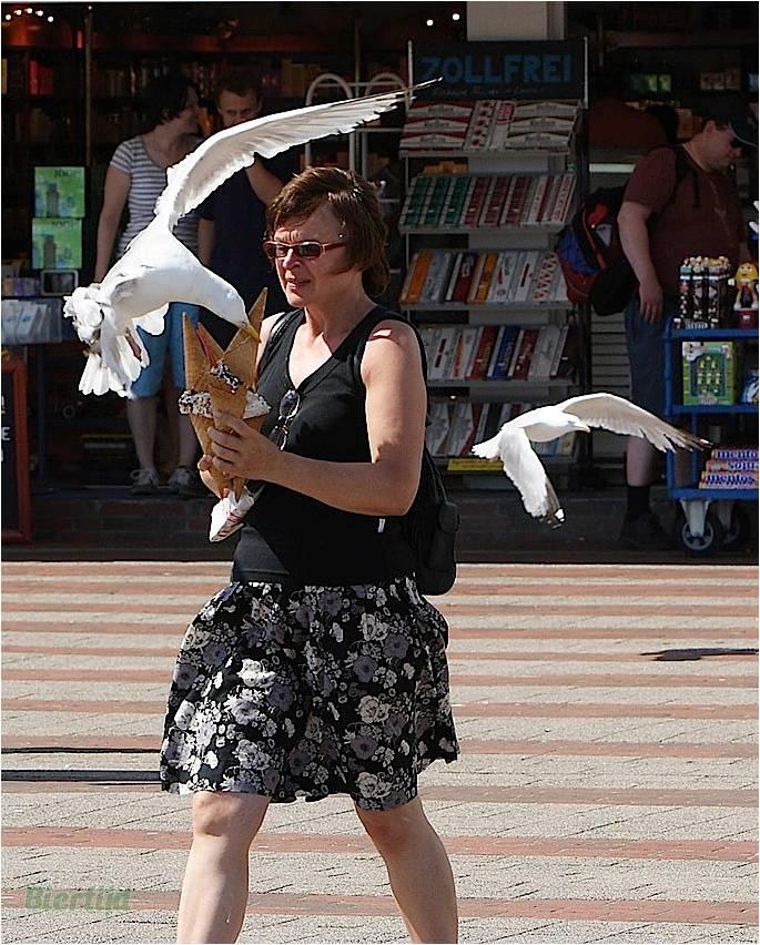 En BZH même les oiseaux sont des sauvages Image611