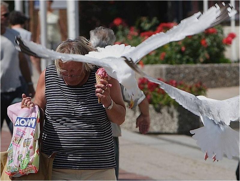 En BZH même les oiseaux sont des sauvages Image810