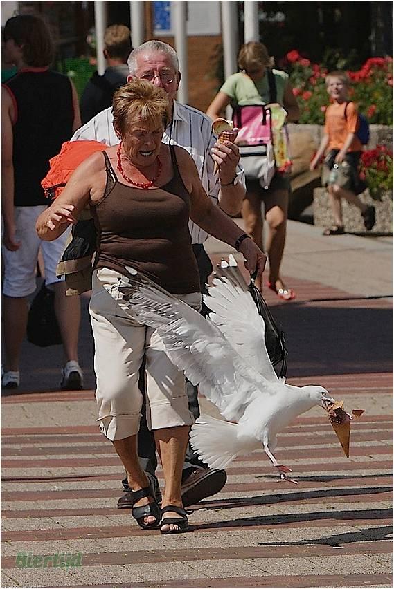 En BZH même les oiseaux sont des sauvages Image910
