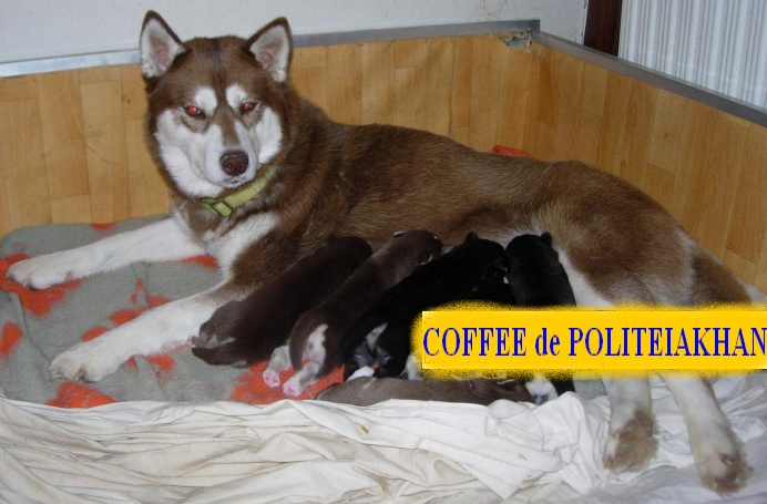 10 CHIENS A ADOPTER DURGENCE : TOUS ADOPTES - Page 2 Coffee10