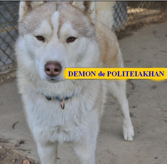 10 CHIENS A ADOPTER DURGENCE : TOUS ADOPTES - Page 2 Damon_10