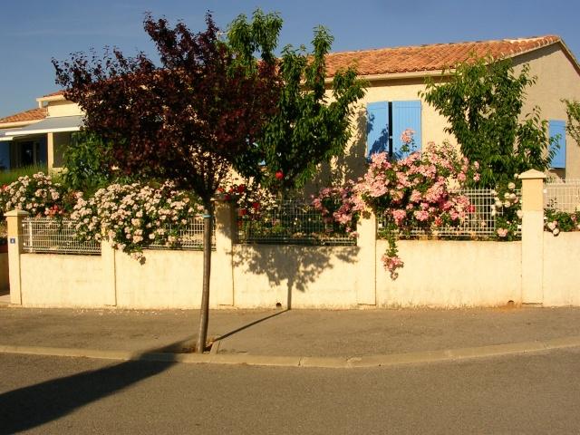 tous ces rosiers que l'on aime - floraisons Dscn1410