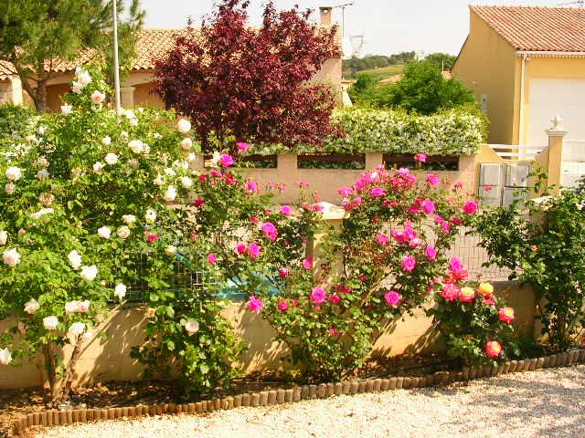 tous ces rosiers que l'on aime - floraisons Dscn2110
